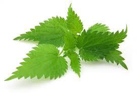 masáže a bylinky pro zdraví